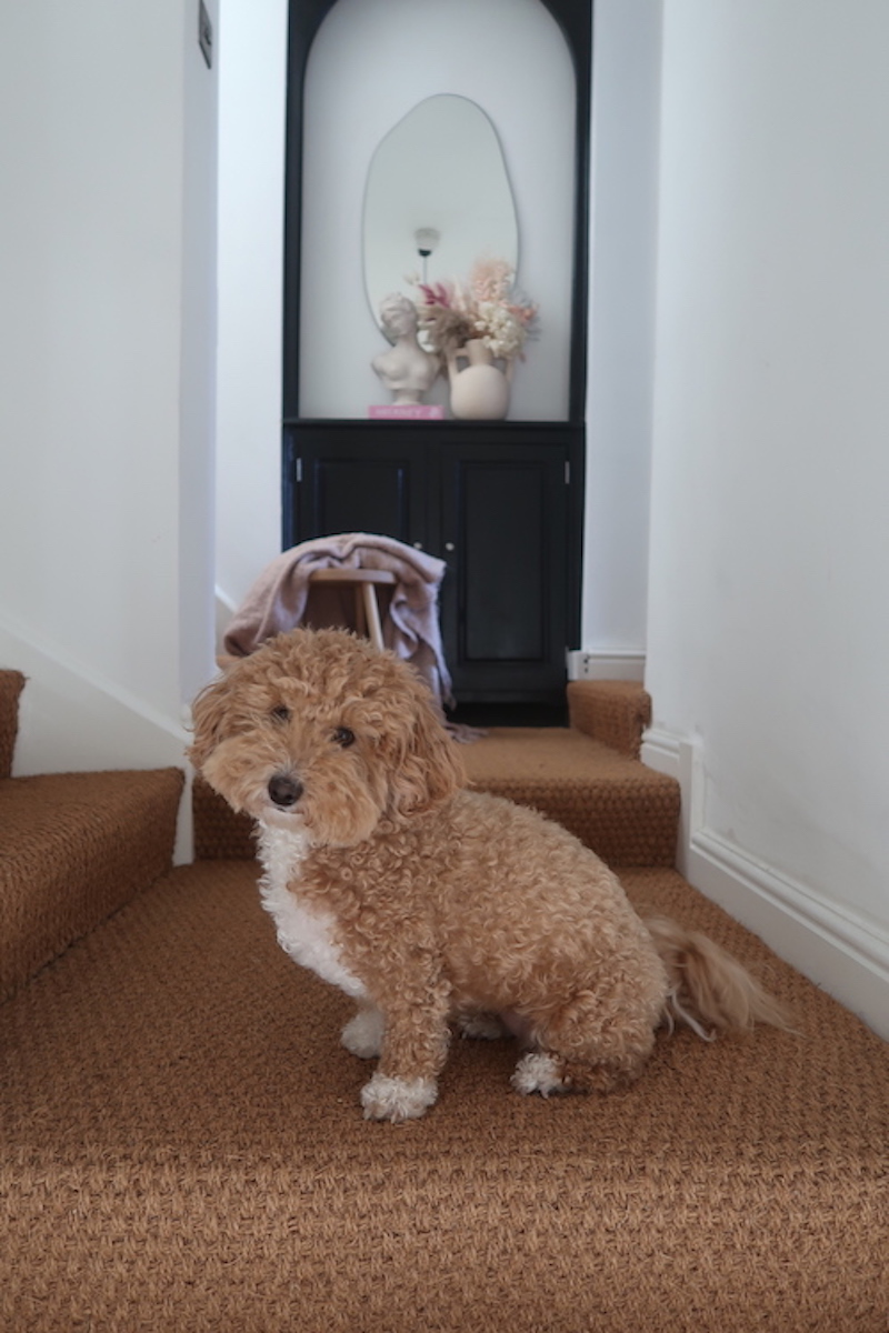 Natural beauty - Sinead's pooch loves her new Coir stair carpet too